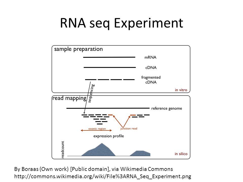 RNA seq Experiment By Boraas (Own work) [Public domain], via Wikimedia Commons.